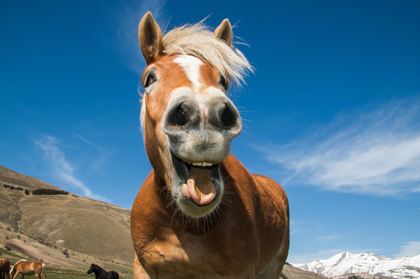 cavallo felice intramundi