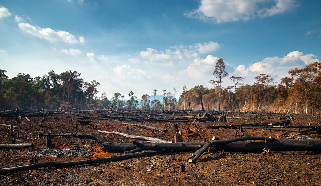 deforestazione impatto ambientale