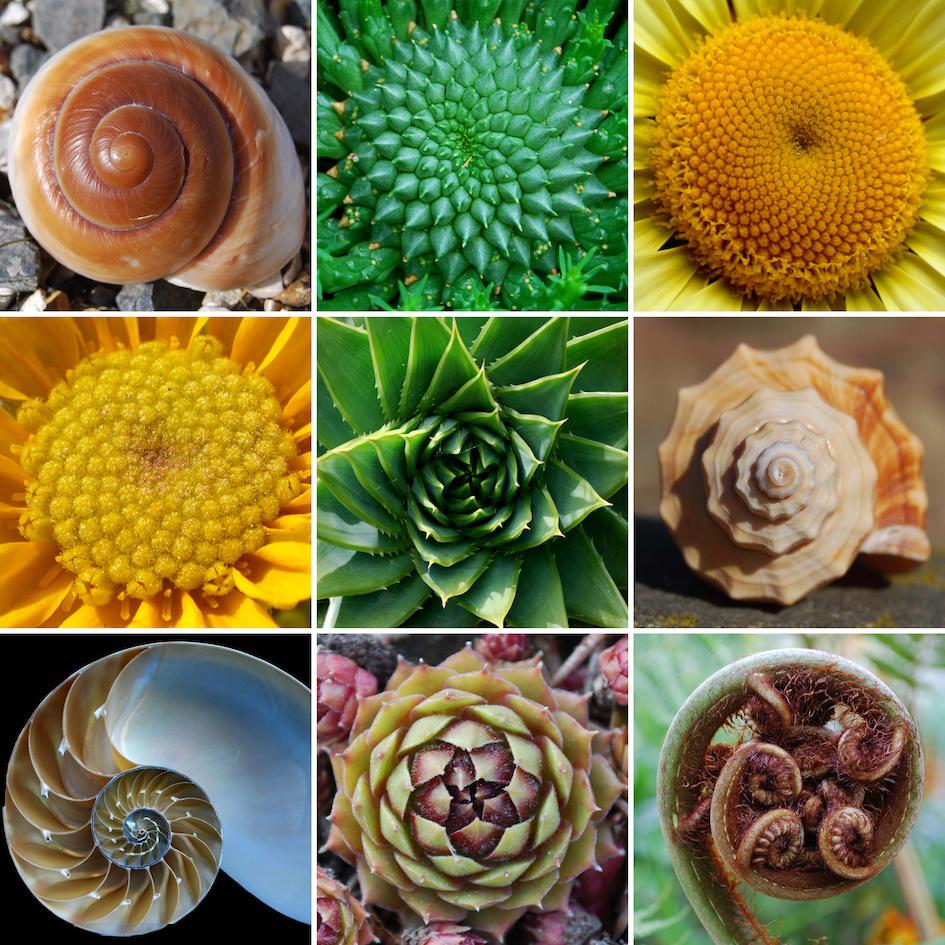 Fibonacci natura intramundi