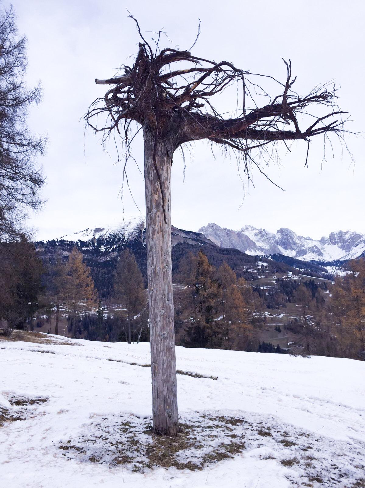 Santa Cristina Troi Unika La radice Monte Pana