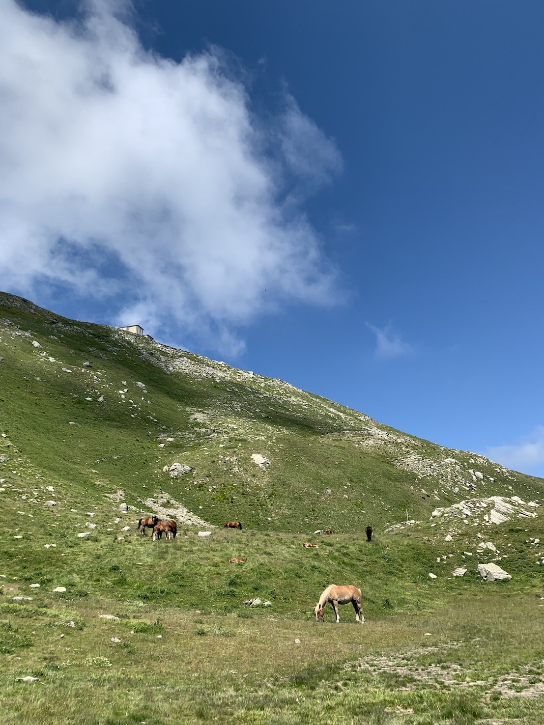 Cavalli al Monte Cimone Sestola
