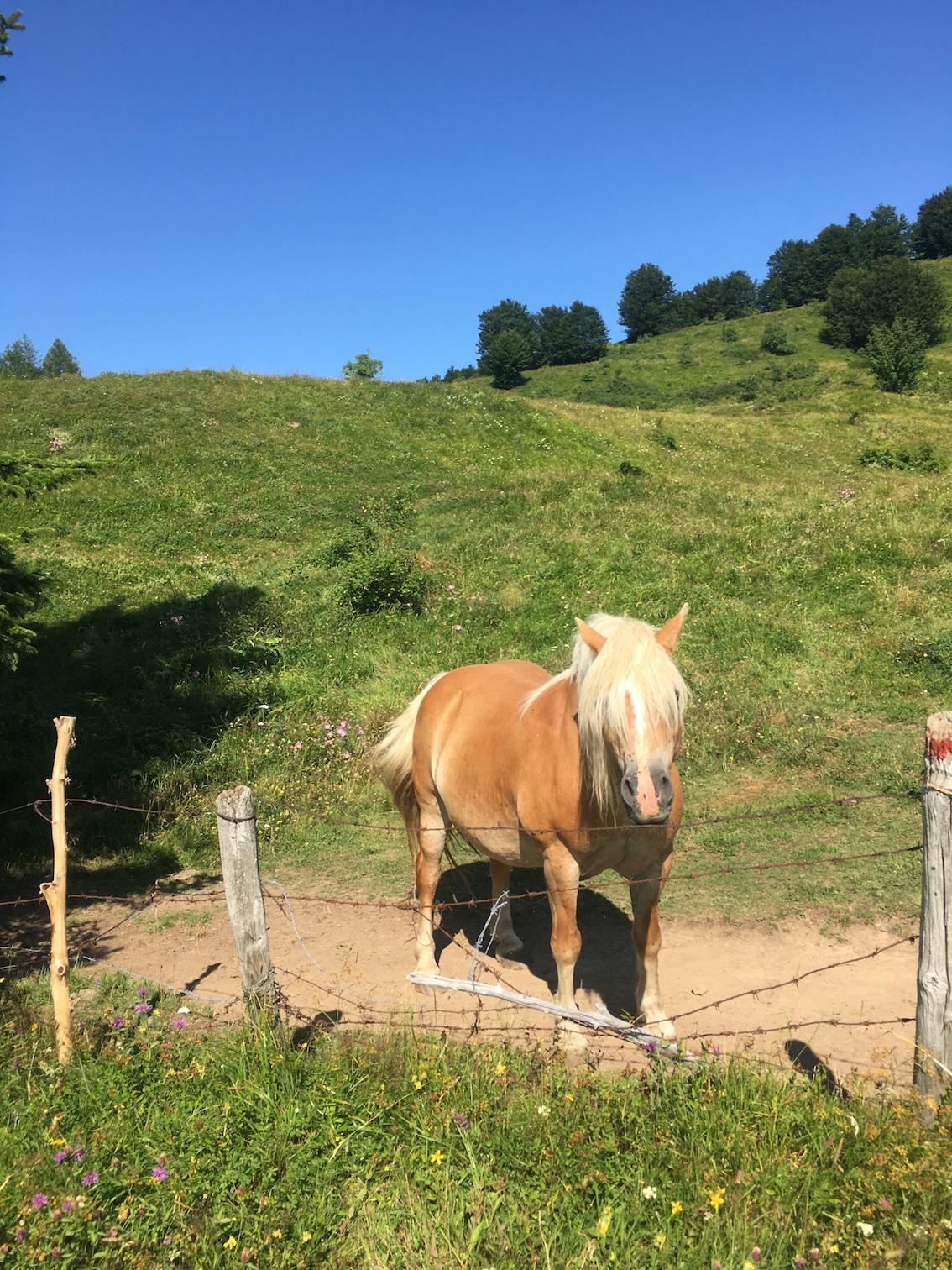 cavallo intramundi