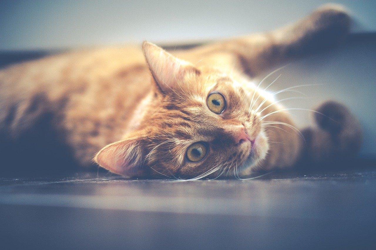 Gli animali hanno un'anima intramundi
