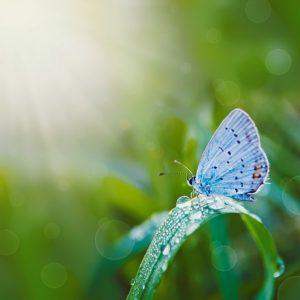 Farfalla animale guida Intramundi test