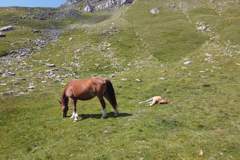 Cavalli Monte Cimone Sestola