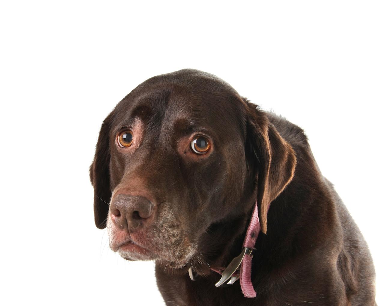 cane triste intramundi