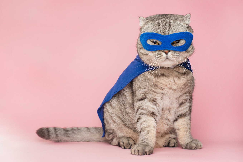 gatto eroe intramundi