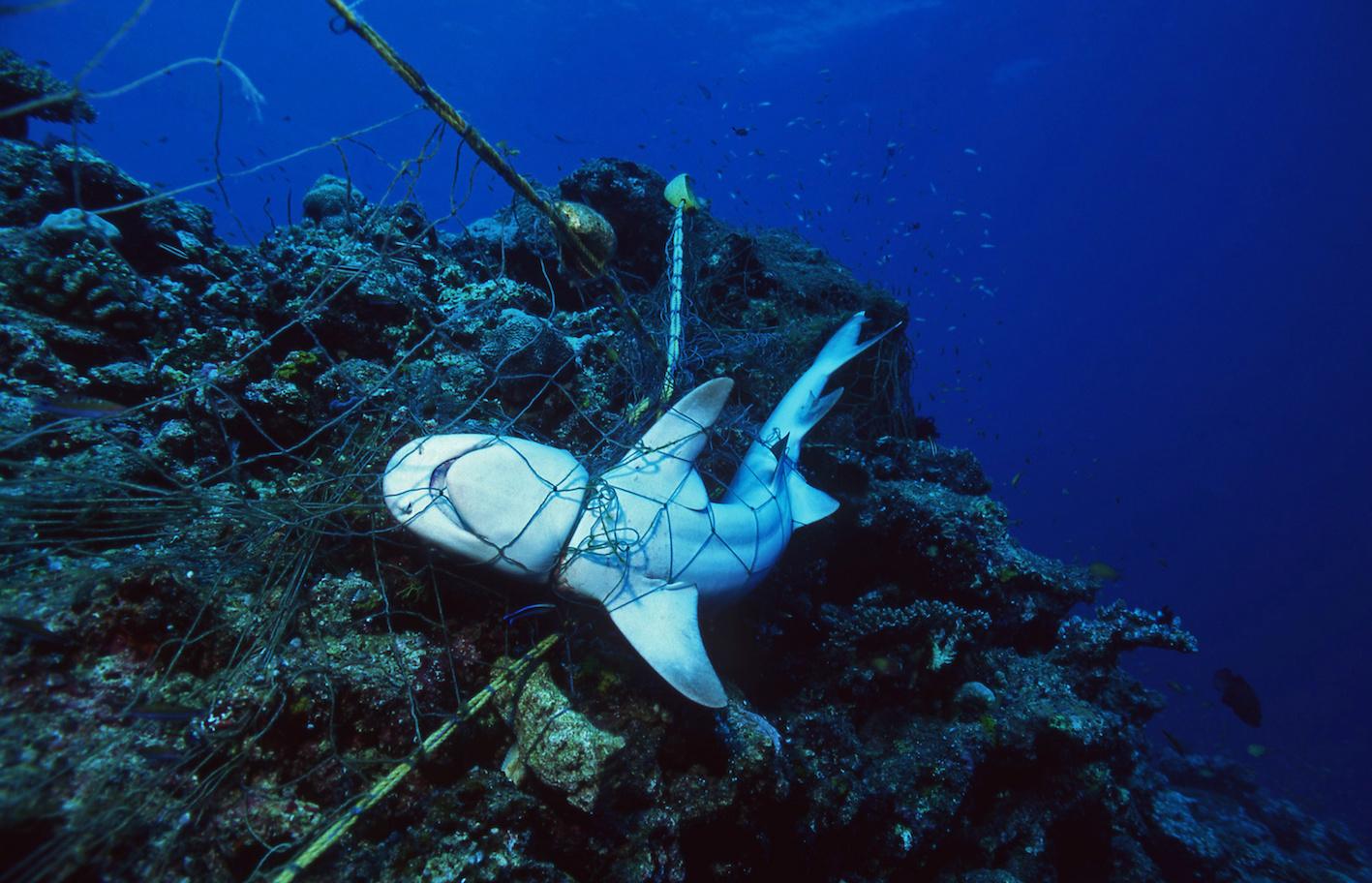 allevamenti di pesce intramundi