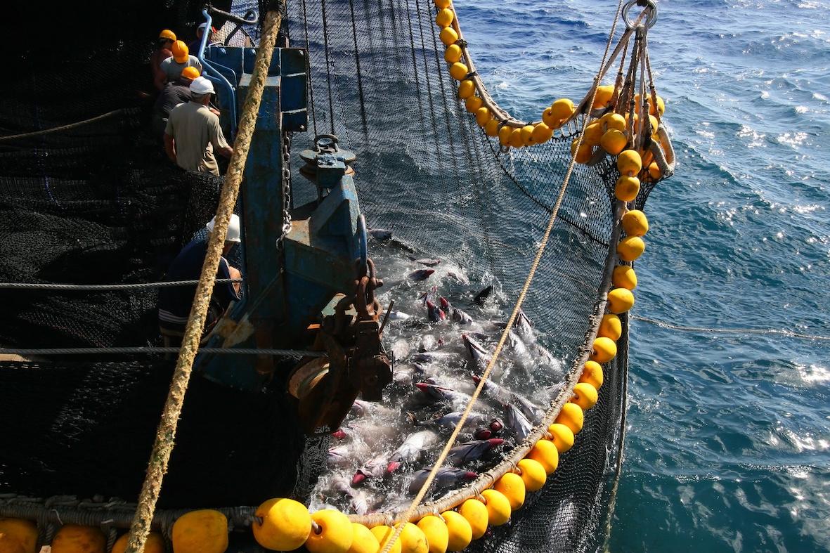 pesca intensiva intramundi