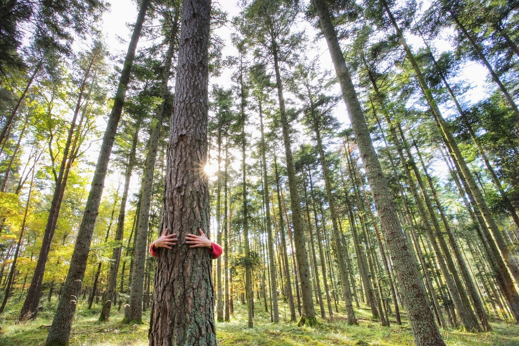 albero vita intramundi