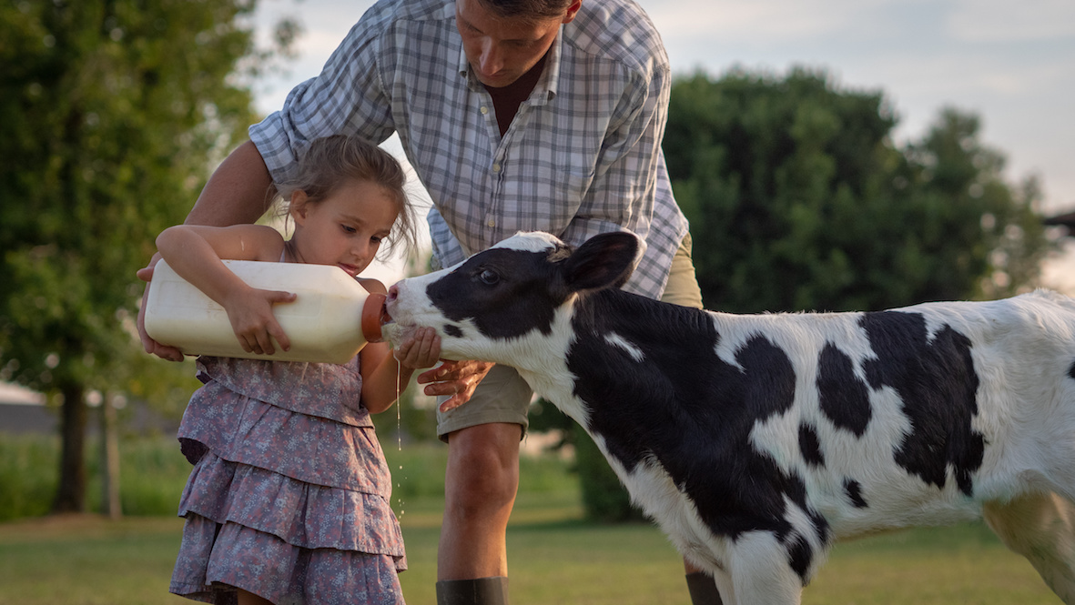 allattare un vitello intramundi