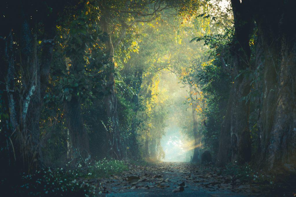 sentiero foresta intramundi