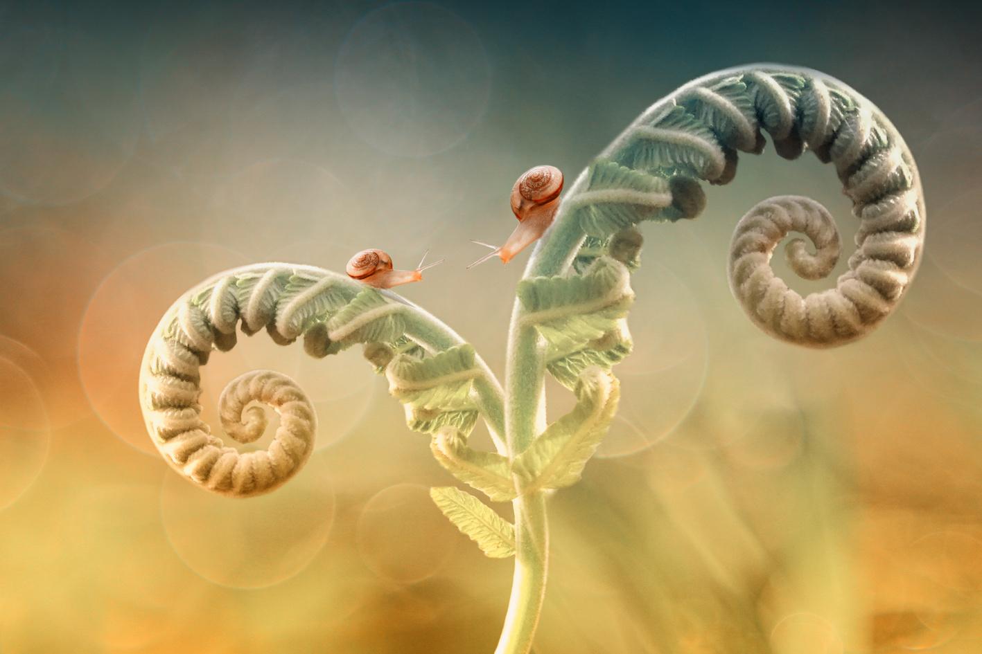 Sequenza Fibonacci intramundi