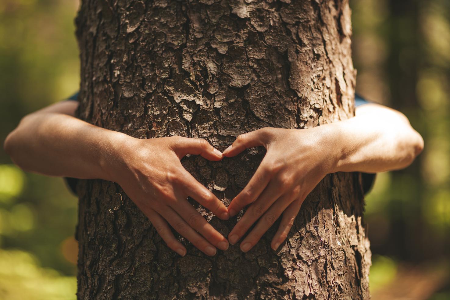 abbraccia un albero intramundi