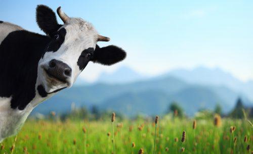 alimentazione vegana motivazioni
